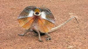 imagenes animales australia animales que solo encontrarás en australia parte 2