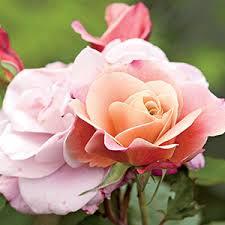 List Of Botanical Gardens List Of Enabling Gardens Rodale S Organic
