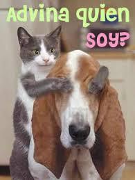 imagenes de gatitos sin frases imágenes con frases divertidas sobre perros y gatos tiernas y chistosas