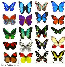 butterfly tattoos blue butterflies butterfly