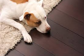 how does most durable flooring for pets must be