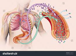 illustration on theme types diabetes stock photo 87108454