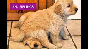 National Sibling Day Meme - sibling day national sibling day youtube