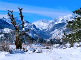 mountain backdrop my favorite tree in rocky mountain national park with the snowy