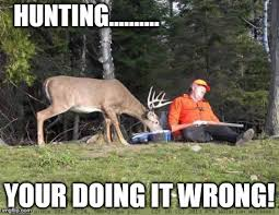 image tagged in funny hunting animals deer imgflip