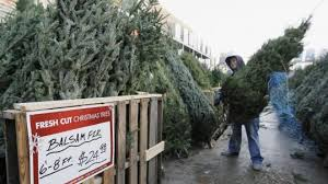 home depot fresh cut trees prices 48 images 5 ft 7 ft fresh