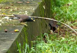 birdwatching kadamakudy islands കടമക ക ട