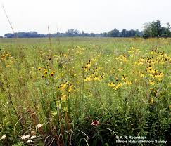 illinois natural history survey prairieplants r