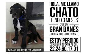 american pitbull terrier 9 meses hernan cristante hcristante twitter