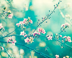 teal flowers teal photography turquoise aqua blue wall pink nursery