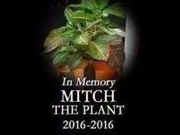 Mitch Meme - rip mitch the plant 2016 2016 memes youtube