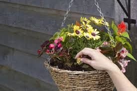 How Do Plants Get Diseases How Does A Fertilizer Work Love The Garden