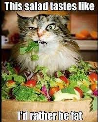 wilford brimley diabeetus cat home facebook