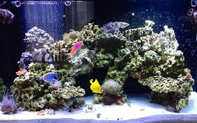 Aquascape Online Show Off Your Archways Stairways And Other Unique Aquascaping