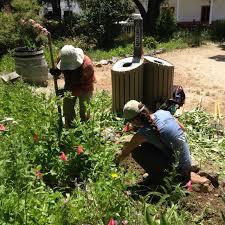 santa cruz native plants native plant garden in sjb sows knowledge hope for local tribe