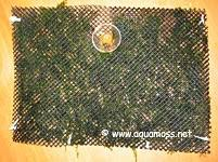 live christmas moss decoration do it yourself backdrop