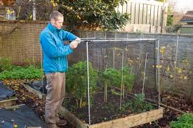 protecting your garden from birds u2013 which gardening helpdesk