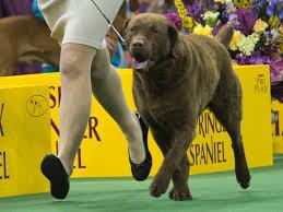 belgian shepherd nova scotia the smartest dog breeds business insider