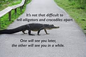 Crocodile Meme - how to tell the difference between alligators and crocodiles album