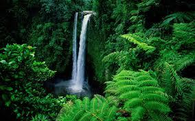 waterfall fresh trees river forest lush green wallpaper hd