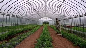 planting organic tomatoes in the greenhouse youtube