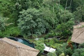 maya ubud resort u0026 spa ubud afar