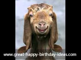 happy birthday funny card from an old goat youtube