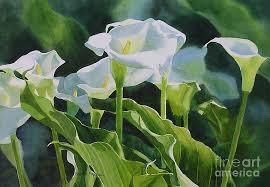 Calla Lillies Calla Lily Paintings Fine Art America