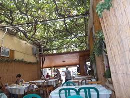 Grape Vine Pergola by View Topic A U0026 E U0027s House Pg 85 A Year Or 2 Worth Of Updates