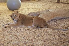 Iowa wild animals images Rescuing animals helping them thrive at wild animal sanctuary jpg