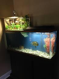 diy semi aquatic turtle habitat clublifeglobal com