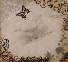lace age serene adjacency the tara fluffy bum