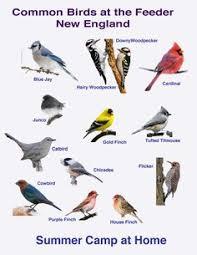 Nc Backyard Birds Woodpecker Identification Chart Exploring Nature Educational