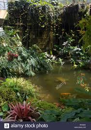 Indoor Pond by Indoor Tropical Pond Stock Photos U0026 Indoor Tropical Pond Stock