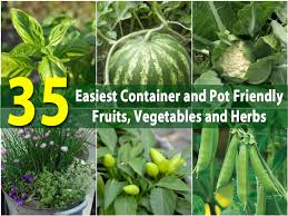 Potted Plants For Patio The 35 Easiest Container And Pot Friendly Fruits Vegetables And