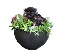 this is a wall mounted succulents u201ccollage u201d u2013 all the rage on