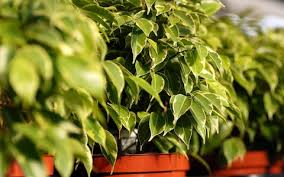 Plants To Keep In Bathroom The Best Houseplants To Clean The Air In Your Home As Recommended
