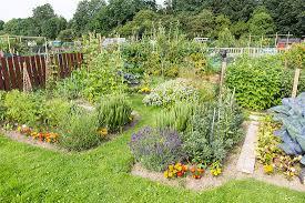 how to start an organic garden the gardens
