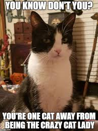 Crazy Cat Meme - you know don t you you re one cat away from being the crazy cat lady