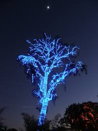 Zoo Lights Az by The World U0027s Best Photos Of Phoenix And Srp Flickr Hive Mind