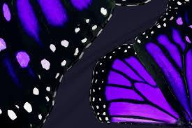 giant purple monarch butterfly wings fabric bonnie phantasm