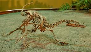 velociraptor facts for kids yourkidsplanet com