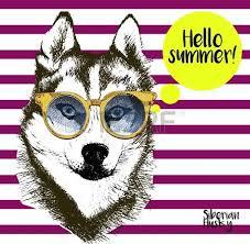 american eskimo dog vector 624 eskimo dog stock illustrations cliparts and royalty free