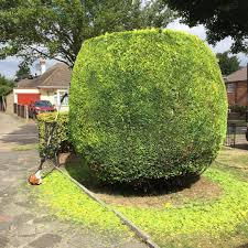 hedges and small trees simply gardens