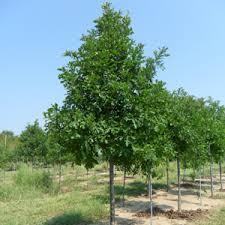 nurseries wholesale supplier of premium plant stock