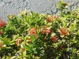 Fertilizer For Flowering Shrubs - the right fertilizers and soil for all your tropical plants