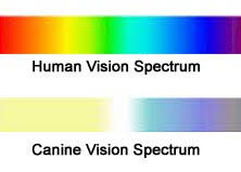 Human Color Blindness Hart Humane Animal Rescue Team Blog Mutterings Color Blindness