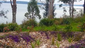 native plant nursery sydney creating a spirit lifting garden u2013 narara eco living network