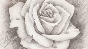 pencil sketches of roses drawing flowers how to draw a rose with
