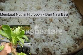 cara membuat cairan hidroponik cara membuat sendiri nutrisi hidroponik dari nasi basi kabartani